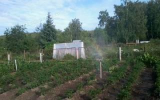 Как часто поливать овощи