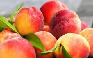 Саженцы персика для подмосковья