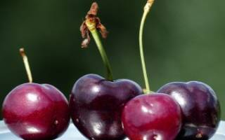 Как выбрать саженцы вишни