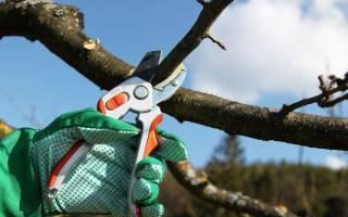 Когда обрезать плодовые деревья осенью