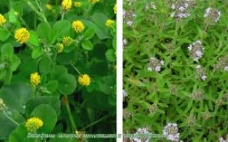 Удобрения для кислых почв
