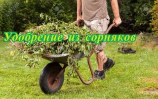 Зеленое удобрение из сорняков