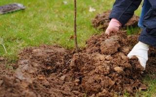 Чем удобрять глинистую почву