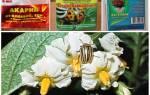 Можно ли обрабатывать картофель от колорадского жука во время цветения