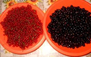 Варенье из смородины черной и красной вместе