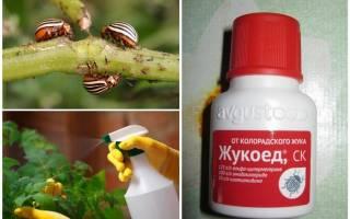 Жукоед от колорадского жука