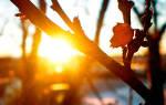 Крыжовник весной уход
