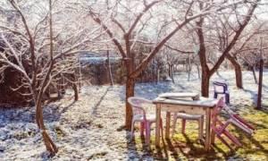 Что делать если замерзла вишня