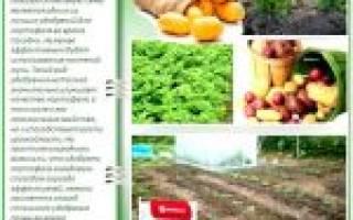 Бульба удобрение для картофеля
