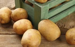 Можно ли мыть картошку перед хранением