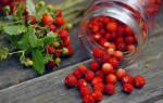 Посев земляники ремонтантной семенами