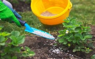 Удобрение земляники весной