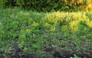 Какие сорняки растут на кислых почвах