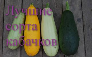 Семена кабачков лучшие сорта для открытого грунта