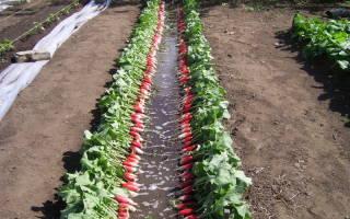 Что посадить после редиса
