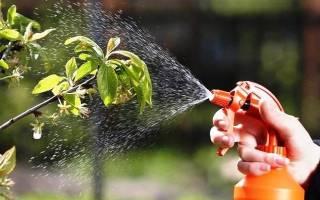 Чем опрыскивать вишню после цветения